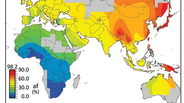 Possible archaic extent of HLA-A allele in modern humans. Red represents areas where archaic alleles are common, and blue are regions where archaic alleles are absent.