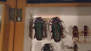 Preserved insects on display