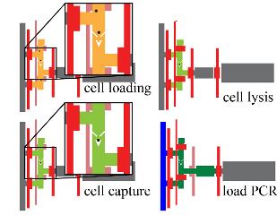 Cells flow into individual capture chambers, where they are washed and lysed, before being fed into the RT PCR reaction