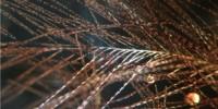 image: Ruffling Dinosaur Feathers