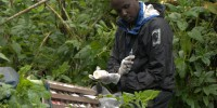 Jean-Felix Kinani working in the field