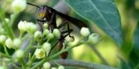 image: Opinion: Species Origins DO Matter!