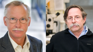 Franz-Ulrich Hartl (left) of the Max Planck Institute of Biochemistry and Arthur L. Horwich of Yale University School of Medicine took home the 2011 Albert Lasker Basic Medical Research Award for their work on protein folding