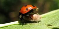 image: Ladybug Zombies