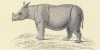 image: Rhino Goes Extinct in Vietnam