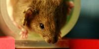 image: Avoiding Animal Testing