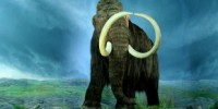 image: Mammoth Proteome Described