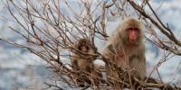 image: Monkeys Track Radiation