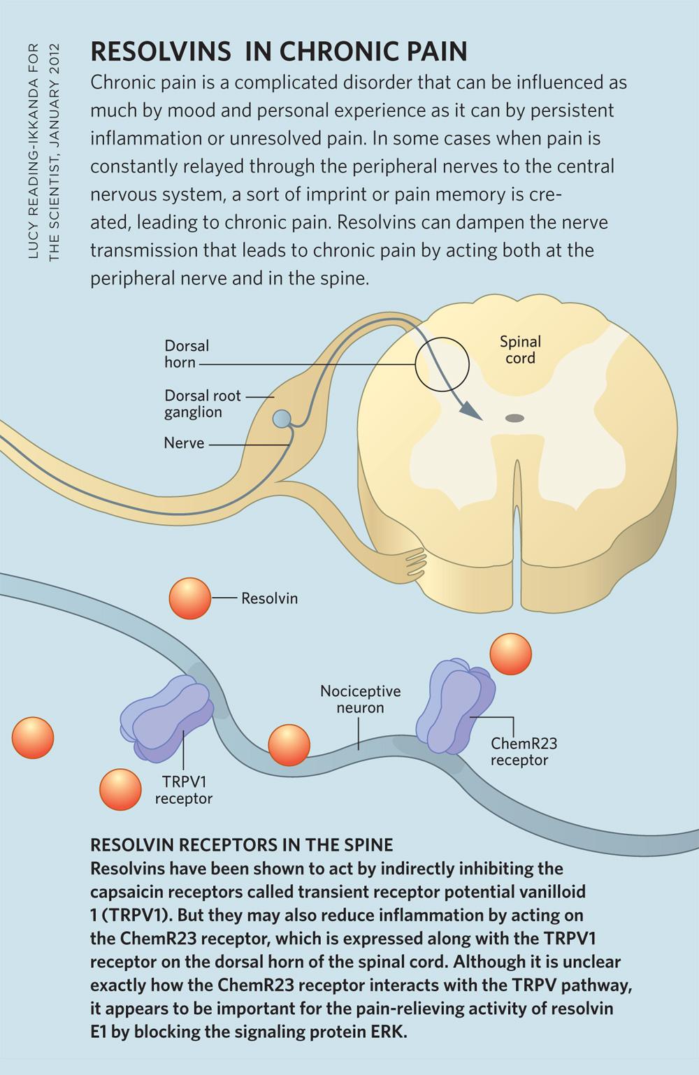 Chronic Pain Mechanism Resolvins in Chronic Pain