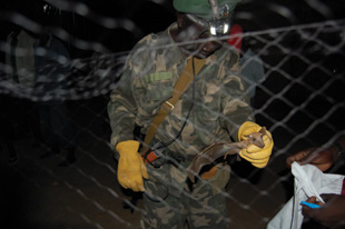 Wildlife officer Wurube Alison retrieving bats from a net in South Sudan