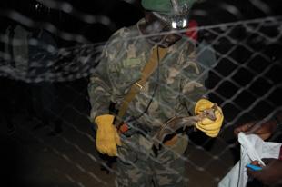 Wildlife officer Wurube Alison retrieving bats from a net in South Sudan