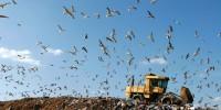 image: Hallowed Landfill