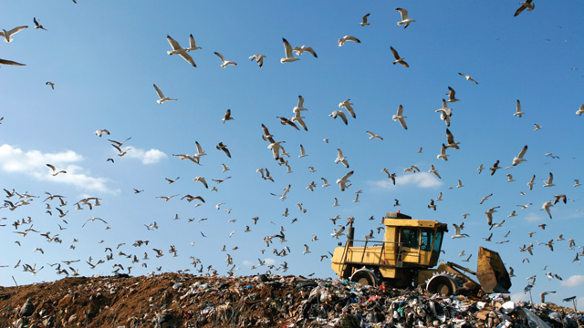 image: Hallowed Landfill