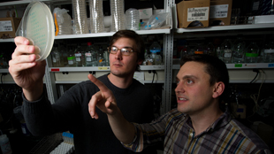 Justin Meyer and co-author Devin Dobias examine E. coli growth. G.L. Kohuth