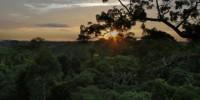 image: Saving the Amazon Rainforest