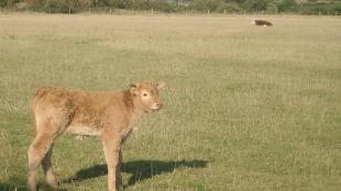 image: New Herd Virus Haunts Europe