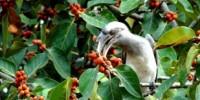 image: Budget Cuts Shutter Biodiversity Program