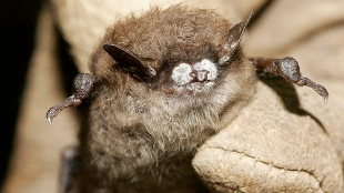 image: Bat Deaths Hit 6 Million