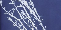 Cyanotype of Fucus nodosus from Anna Atkins' Photographs of British Algae: Cyanotype Impressions, Part II