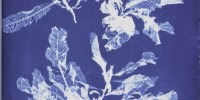 Cyanotype of Delesseria sanguinea from Anna Atkins' Photographs of British Algae: Cyanotype Impressions, Part V