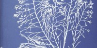 Cyanotype of Cystoseira granulata from Anna Atkins' Photographs of British Algae: Cyanotype Impressions, Part I New York Public Library