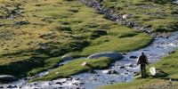 image: Swarming Mongolia