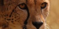 image: Preserving Endangered Gametes