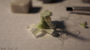 A flower in the process of being disected by Murayama.