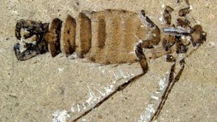 image: Jurassic Parasites