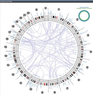 MAPPING GENE NETWORKS: The Regulome Explorer allows researchers to explore connections between mutations, expression-level changes, and clinical outcomes with a handful of preloaded data sets. This circular graphic of the genome shows the associations, depicted as purple lines, between genes with expression level changes in glioblastoma tumors.