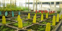 The Donald Danforth Plant Science Center (#8 USA) focuses on ways to increase crop yield and enhance nutrition.