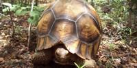 image: Telltale Tortoises