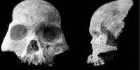 image: New Human Species?