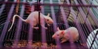 image: Lab Animal Transport Ends