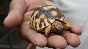image: Rare Reptiles Breed in Wild