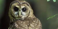 image: Opinion: Politics Doesn't Threaten Owl