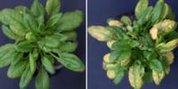 image: Seeds Inherit Memories of Enemies