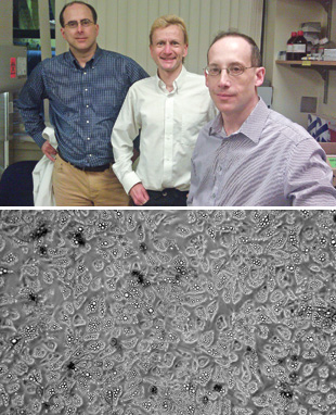 TARGETING STEM CELLS: The Energesis team, including senior scientist Scott Gullicksen (left), CSO and cofounder Olivier Boss (center), and COO and cofounder Brian Freeman, is targeting human brown adipocyte stem cells (bottom, after differentiation into brown adipocytes) to search for novel obesity drug targets.