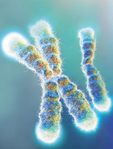 image: Telomeres in Disease