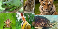 image: Opinion: Saving Species through Economics