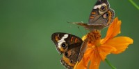 image: Wet Weather Stymies Insects