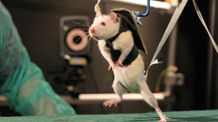 image: Active Brains Help Heal Paralysis