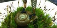image: Electrified Snail