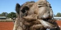image: Camel Pharmacies?