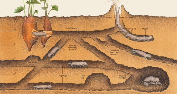 Infographic: Digging the Underground Life View full size JPG   PDF