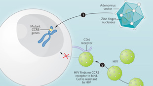 Infographic: Messing with HIV View full size JPG | PDF