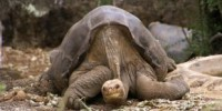 image: Lonesome George Dies Alone