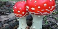 image: The Fungus Among Us