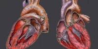 image: Link to Second Heart Attack Uncovered