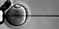 image: Manipulating Eggs to Avoid Disease